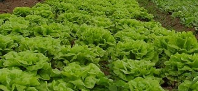 Agroecología como alternativa a extractivismos agrícolas