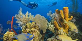 Belice declara moratoria petrolera para proteger sus corales