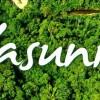 Moratoria petrolera Yasuní-ITT: propuesta política y económica